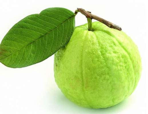 5 health benefits of eating guava lifeberrys english dailyhunt treats constipation guava contains sufficient quantity of dietary fibre and roughage that are extremely beneficial for constipation piles and haemorrhoids ccuart Image collections